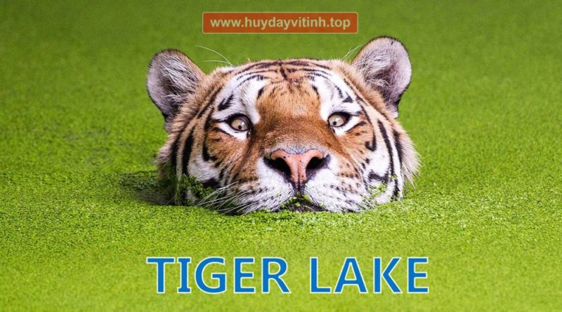chi-tiet-cpu-core-i-the-he-11-tiger-lake-1